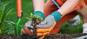 jarné práce v záhrade