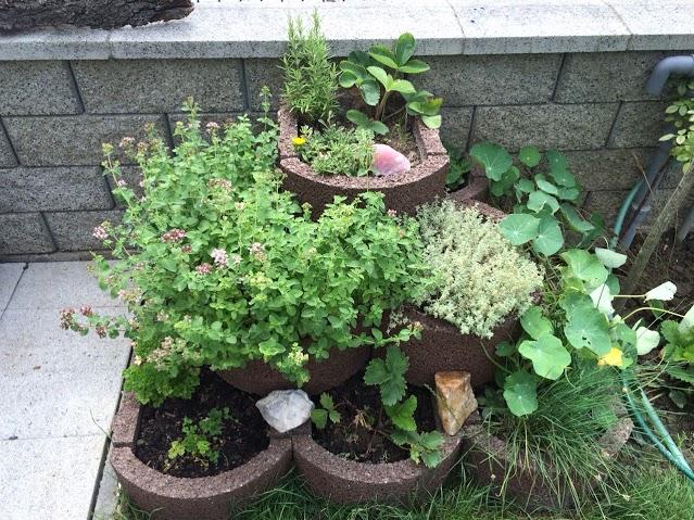 bylinkova-zahrada-4