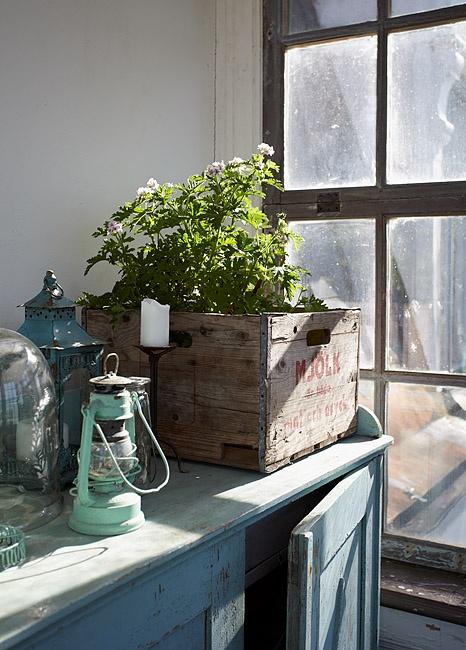 prepravka-bylinky