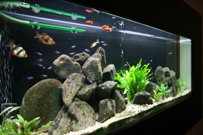 vstavane-akvarium-2