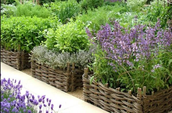 zahrada-uprava-7