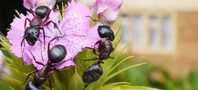 opatrenia proti hmyzu