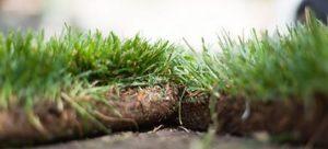 trávnikový koberec detail