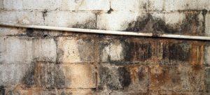 pleseň na tehlovej stene
