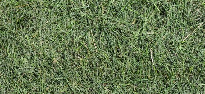 zdravý trávnik - mulčovanie