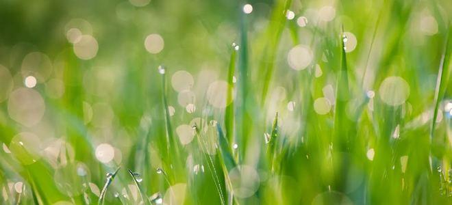 zdravý trávnik