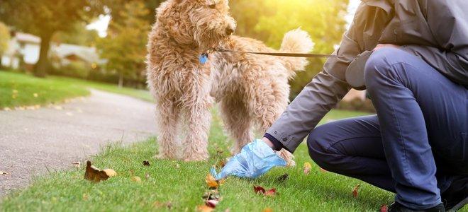 zbierať po psoch