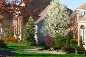 vysaďte stromy okolo domu